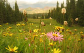 White River National Forest, Vail